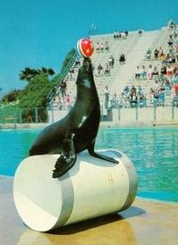 trained-seal